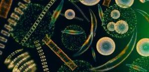Microalgas: é de comer? Os segredos desse superalimento!