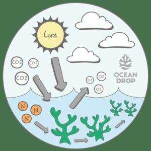 microalgas : fotossíntese infografico