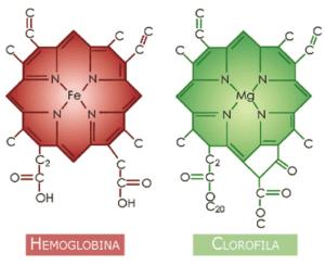 clorofila : molécula