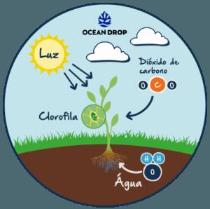 clorofila : fotossíntese infográfico