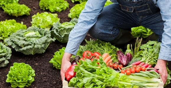 toxinas : alimentos orgânicos
