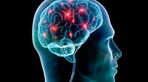Ômega 3 : cérebro