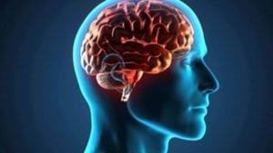 ômega 3 EPA e DHA : cérebro