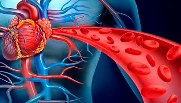 óxido nítrico: corpo humano