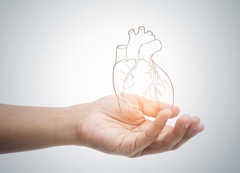 Para que serve zinco quelado: doenças cardiovasculares