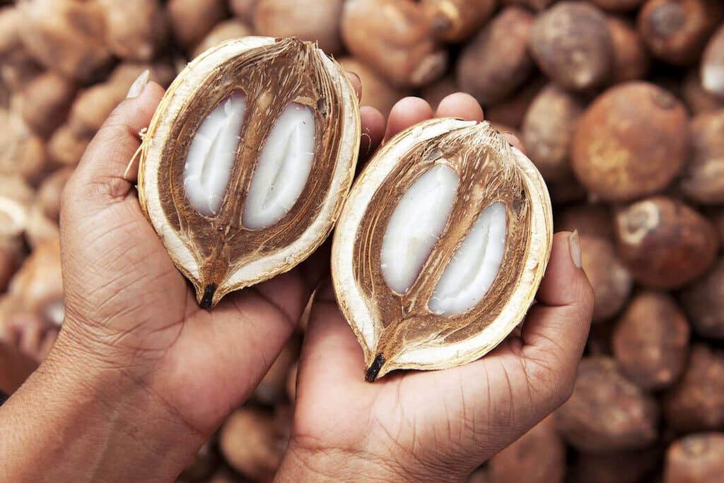 6 incríveis benefícios do uso de Óleo de Babaçu para a pele