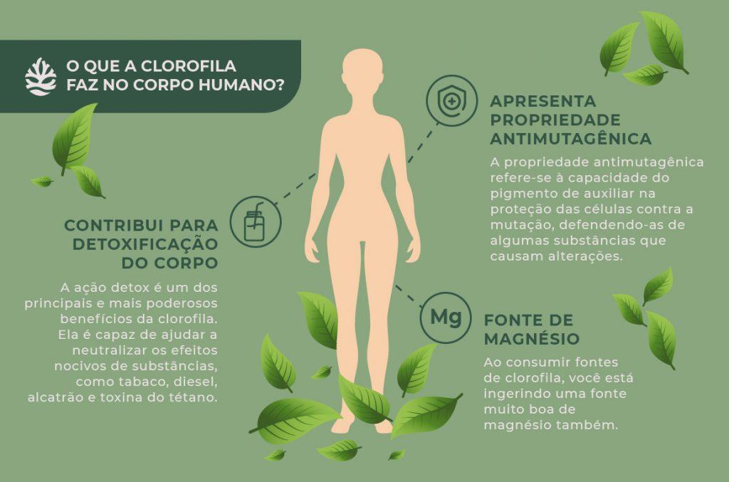 Infográfico - clorofila